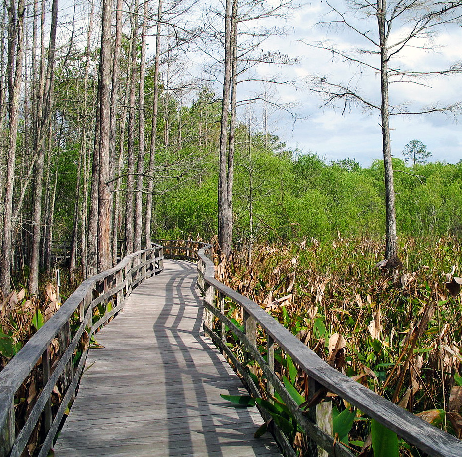 The Everglades is one of several fragile ecosystems in South Florida.