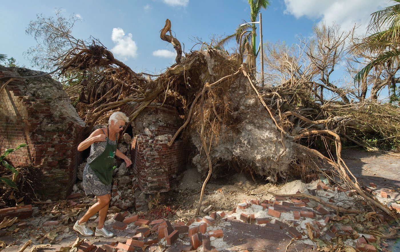 Rosi Ware of the Key West Garden Club walks past the base of an 80-foot strangler fig tree that toppled during the storm. Estimated at 75 years old, the tree was the centerpiece of a Civil War-era fort that had been turned into a popular garden and wedding venue on Higgs Beach in Key West.