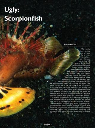 The Odd, the Weird and the Ugly: Stingfish and Ambon Scorpionfish