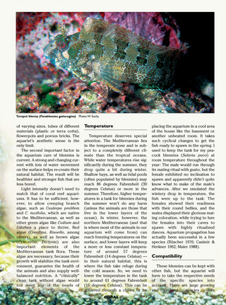 Mediterranean Blennies in Nature and in the Aquarium