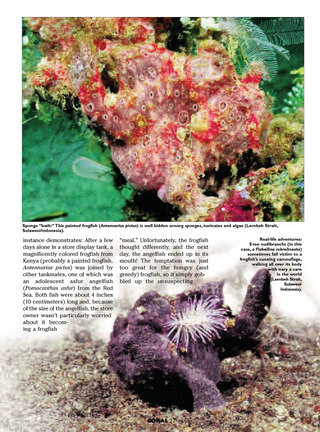 Frogfishes — The Family Antennariidae