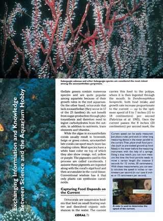Soft Corals — Ecology and Nutrition of Azooxanthellate Octocorals