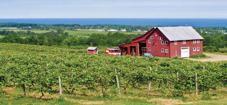 Vineyards along Lake Erie, courtesy North East Chamber of Commerce.