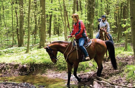 horseback riding in Anderson County