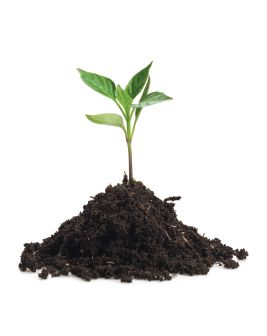 SOWING THE SEEDS OF GROWTH