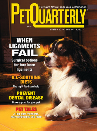 Pet Quarterly