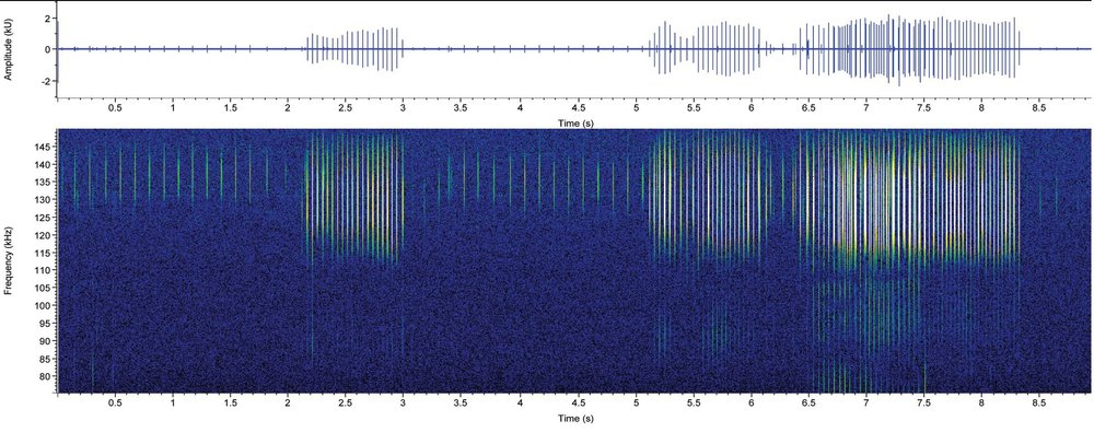 Spectrogram showing harbour porpoise echolocation clicks recorded on the AutoNaut-towed PAM array system, with peak energy at 135 kHz.