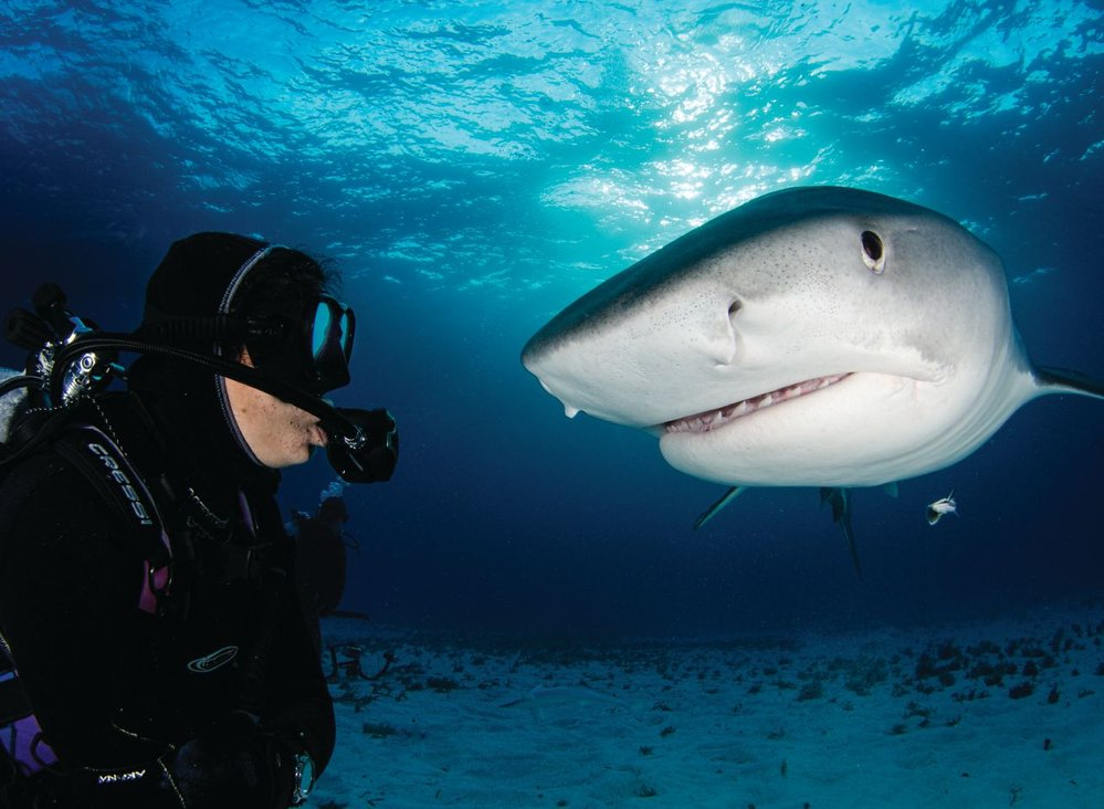 Debra Canabal, owner of Epic Diving, with a tiger shark in the Bahamas. Photo credit: Amanda Cotton.