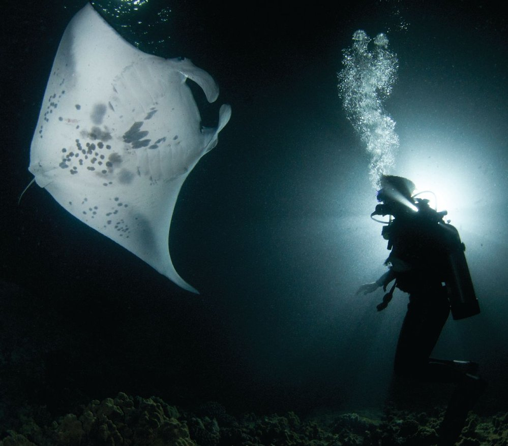 Manta ray with diver off the coast of Kona, Hawaii. Photo credit: Amanda Cotton.