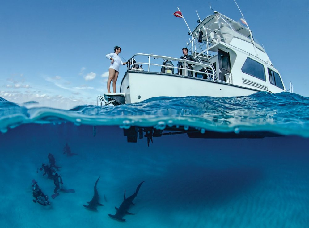Great hammerheads of Bimini with operator Epic Diving. Photo credit: Amanda Cotton.