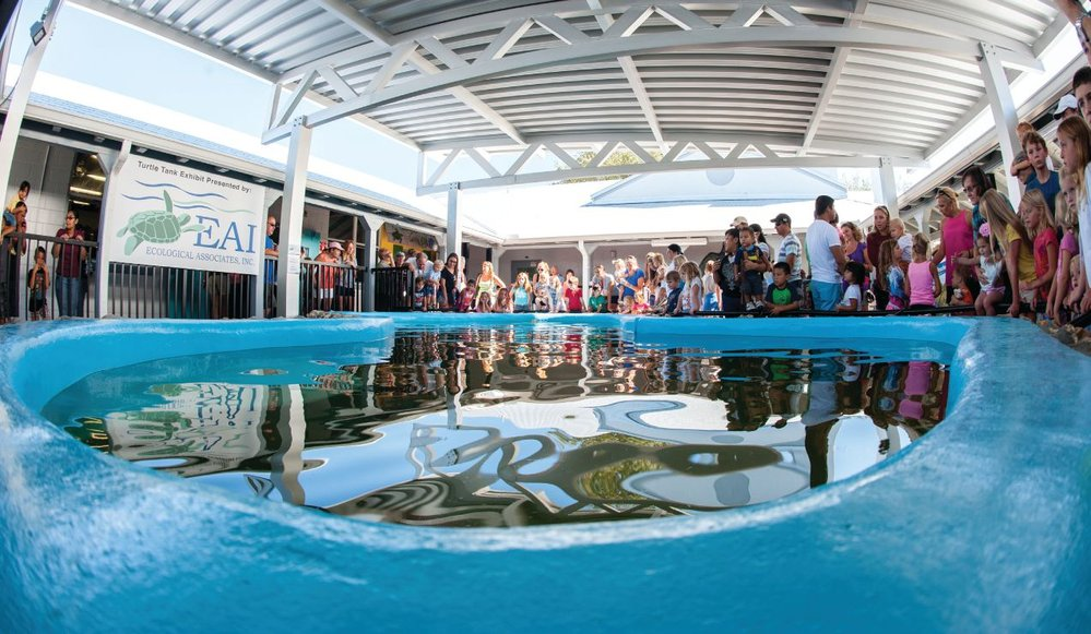 People gather to watch a juvenile loggerhead swim around the new sea turtle tank exhibit, sponsored by EAI, at the Environmental Studies Center in Jensen Beach. Photo credit: Mark Mohlmann.