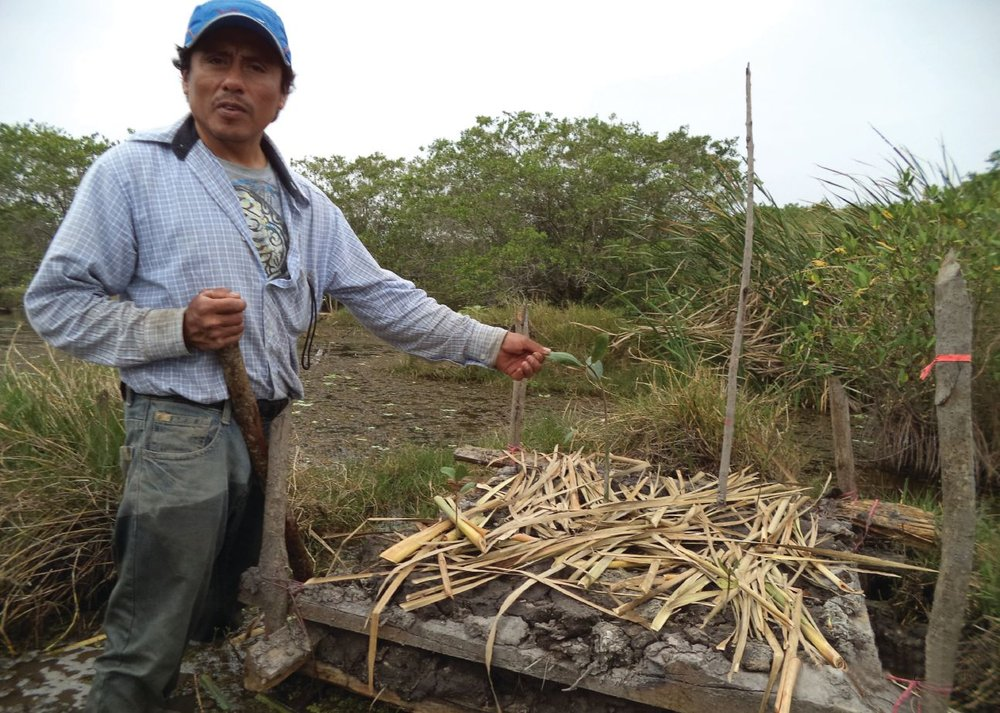 For the Alvarado, Veracruz Lagoon System project, 19 of the 22 people who worked on the production of plants and construction of chinampas and are now conducting monitoring are residents of local communities.