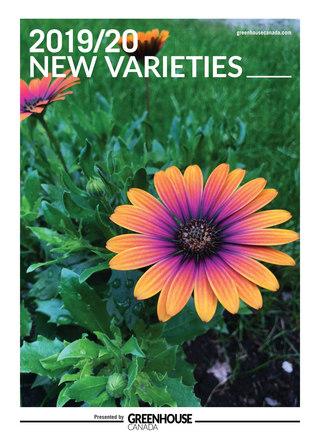 New Varieties 2019/20