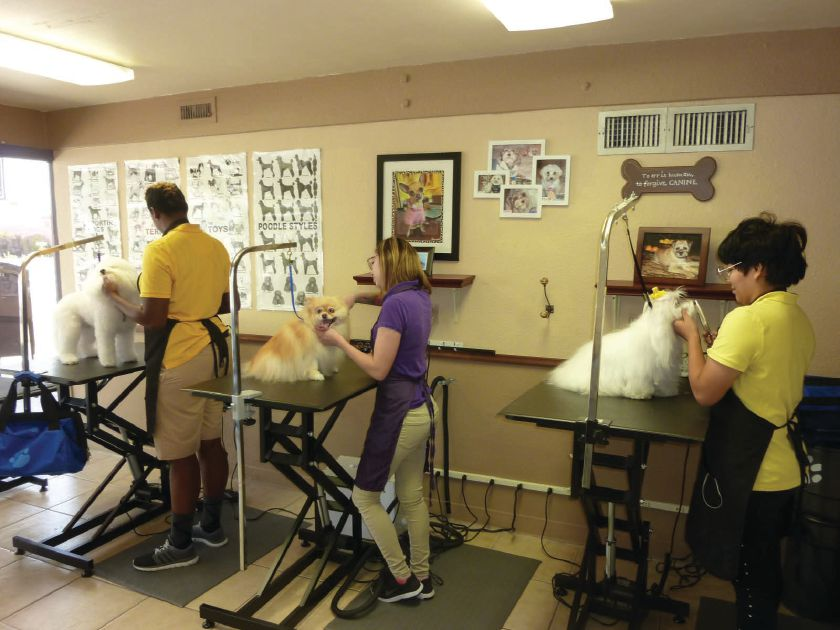 Golden Paws Pet Styling Academy 1