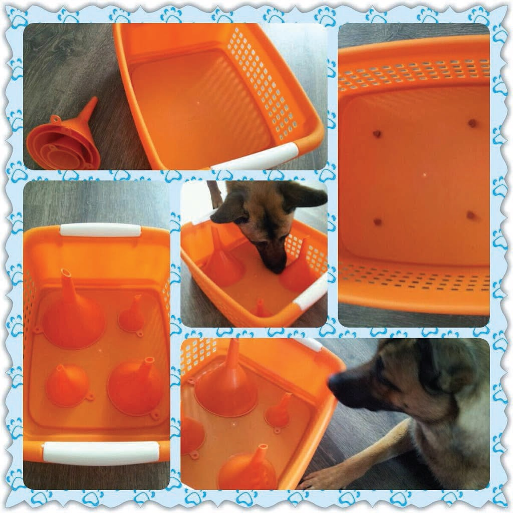 Upside down funnels in a shallow tray or laundry basket that has tasty treats hidden inside will certainly get your pup curious enough to investigate.