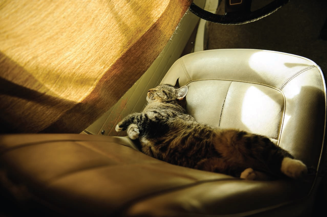 Cats make excellent traveling companions, too.