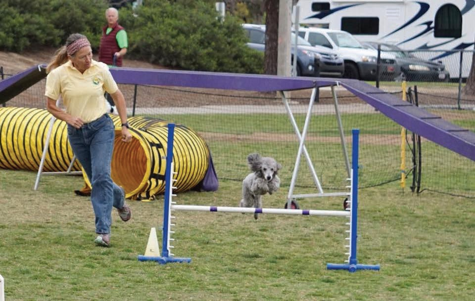 Anne Platt, Dog Quest's agility trainer