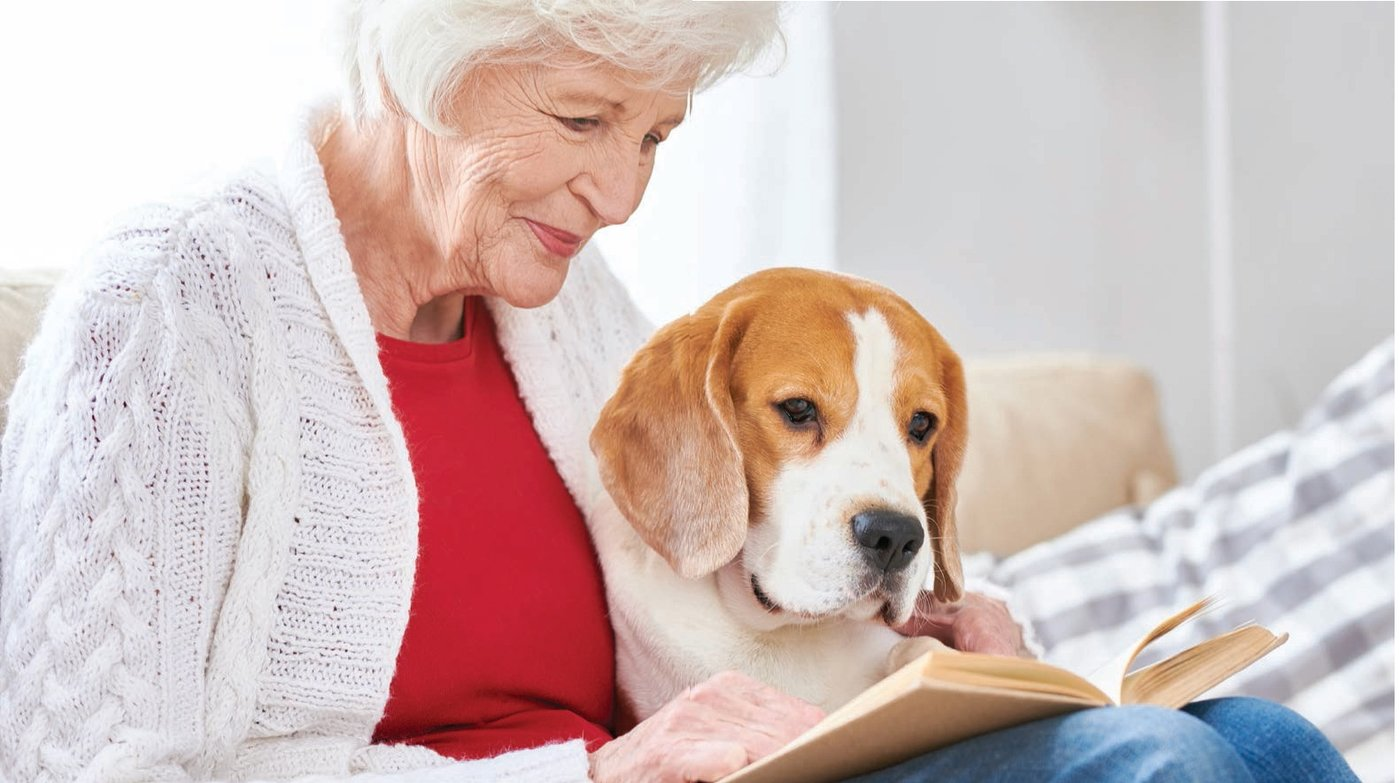 An emotional support dog is a dog that a licensed mental health professional has determined provides some benefit to an individual with a mental or emotional disability.