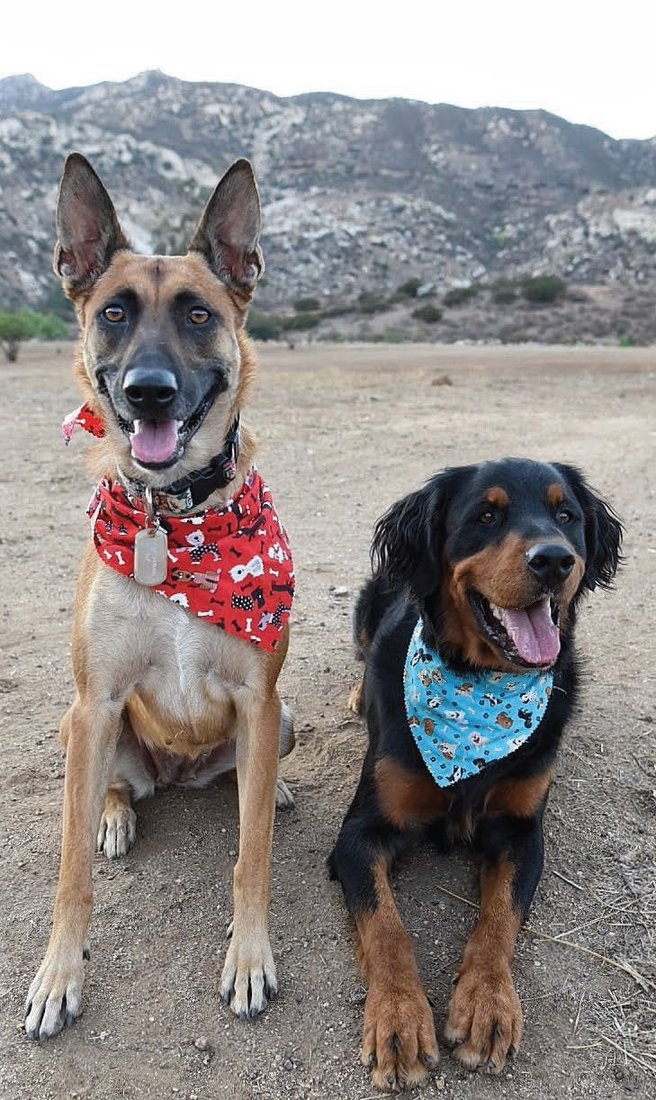 Cover dogs Arih (left) and Bas (right) work hard to help out the Cammies & Canines team, but they always know how to stop and smile big for the camera.