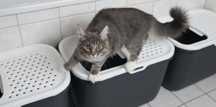Multiple cats? Remember to keep their individual litter boxes in different rooms.