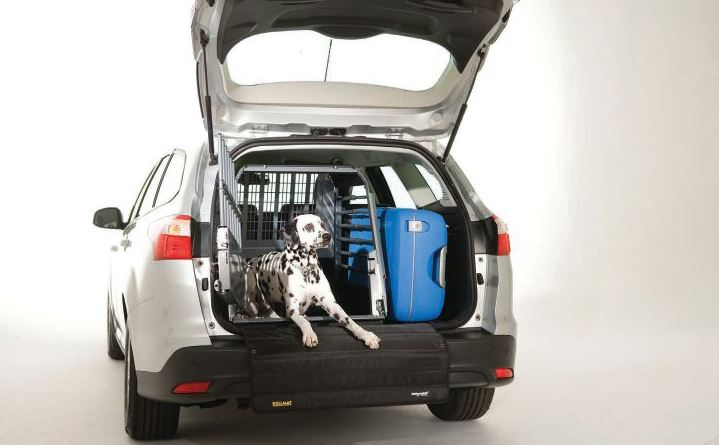 Driving? Keep your pet safe in your car. See the car safety article on page 21 for tips. PHOTO COURTESY 4X4NORTHAMERICA.COM