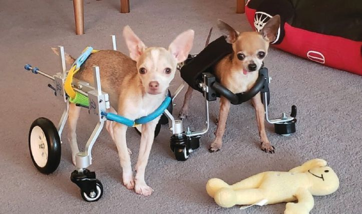 Boogie and his new adopted sibling, Bust A. Moves, who has hydrocephalus and other brain abnormalities, take a ride in their wheelchairs. PHOTO: © ALICIA BAILEY