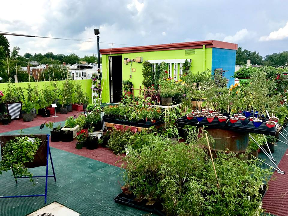 W.S. Jenks & Son in Washington, D.C. is now home to two urban farms.