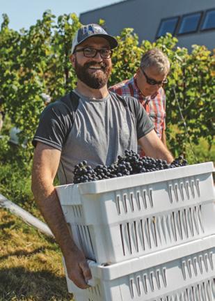 Adam Fizyta carrying grapes.