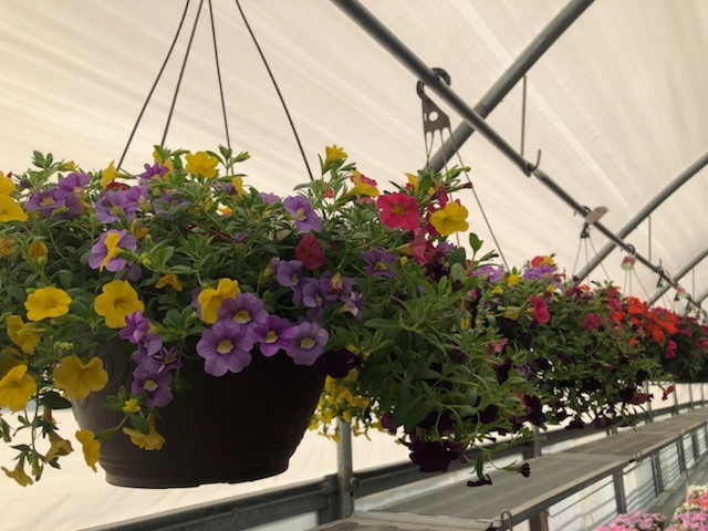 The garden center at Nena Ace has been a popular draw.