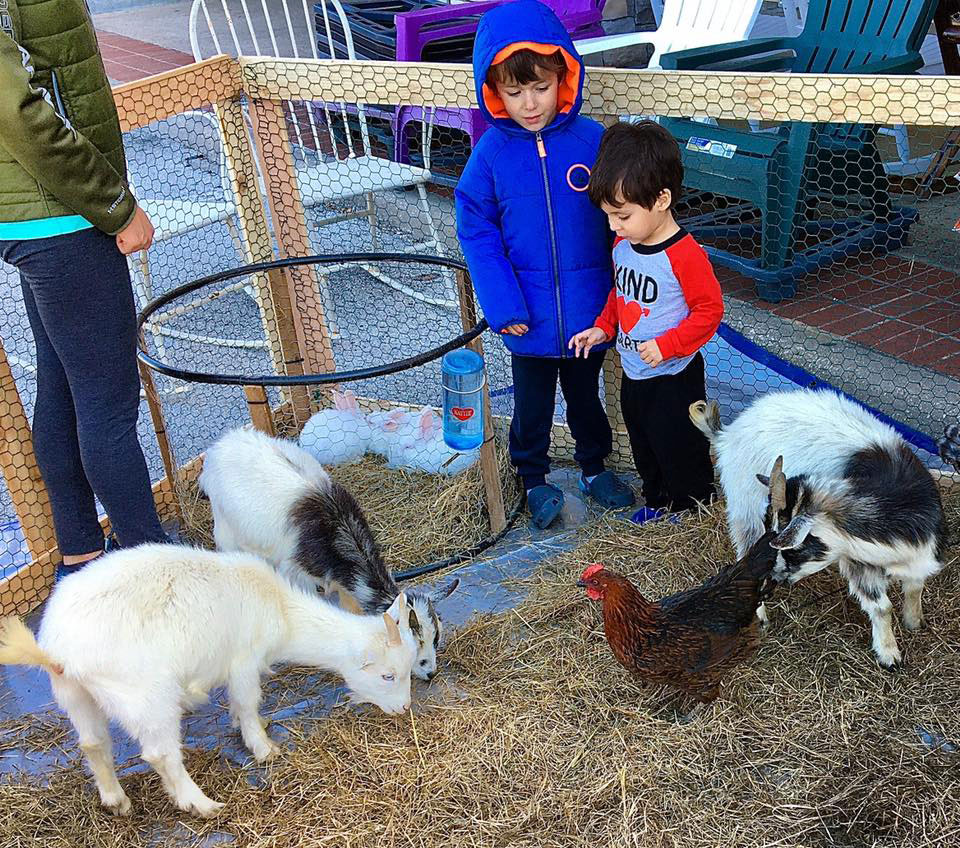 A trip to Rooster Home & Hardware in Dallas can lead to an encounter with goats, bunnies and chickens.