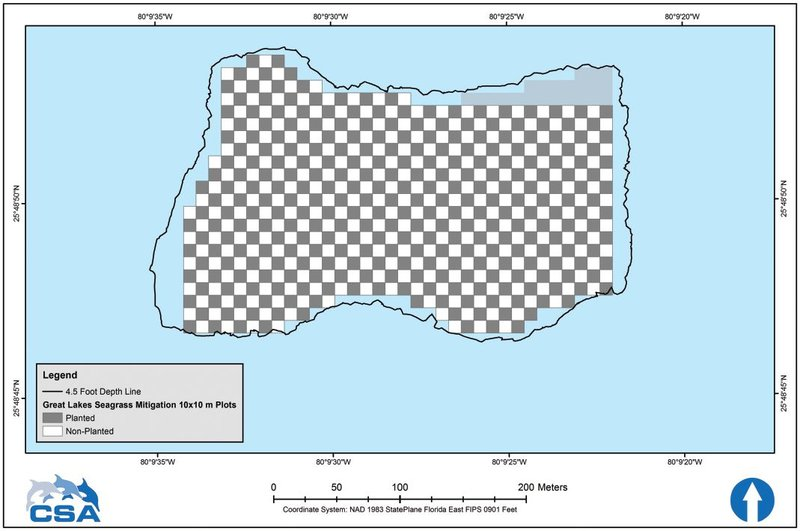 Figure 7. Checkerboard planting grid.