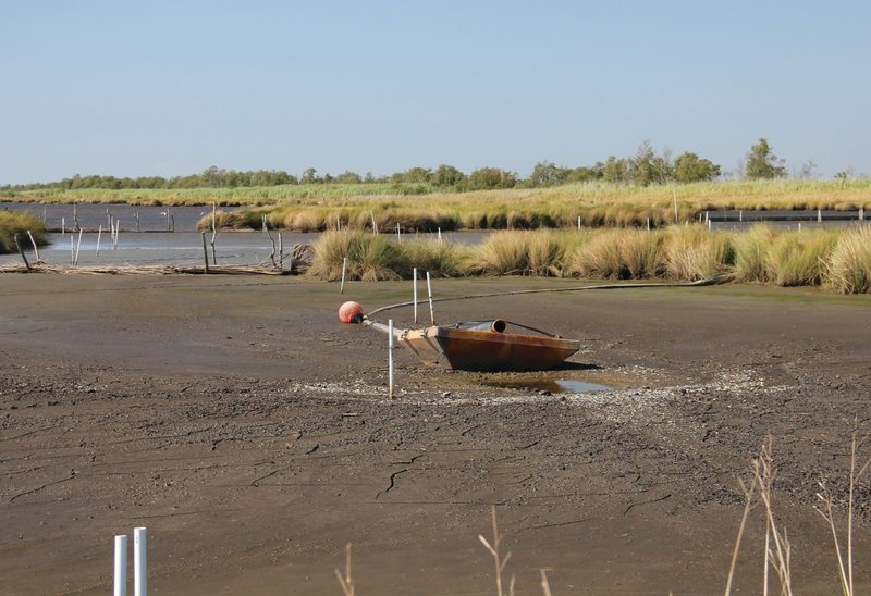 New land created by pumping sediment into a dredging cell at the Paul J. Rainey Wildlife Sanctuary. Photo courtesy of RESTORE The Mississippi River Delta