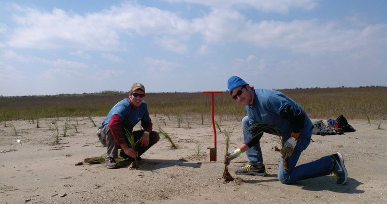 Mississippi River Delta Restoration Campaign members plant Spartina on Grand Terre barrier island as part of the Coalition to Restore Coastal Louisiana's volunteer restoration project. The group planted thousands of grass plugs (Marshhay Cordgrass, aka Spartina, and Bitter Panicum) to prevent erosion and built a mile of fencing to trap sand and speed the development of protective dunes. The island is susceptible to coastal erosion and land loss and, by keeping the Gulf of Mexico out of Barataria Bay, is part of Louisiana's first line of protection from hurricanes, storms and oil spills.